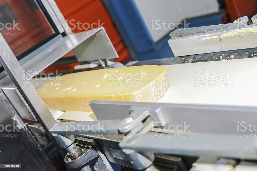 dairy industry stock photo