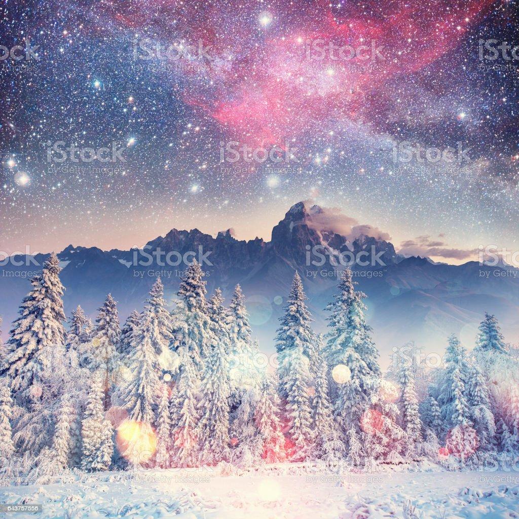 Dairy Star Trek in the winter woods. Carpathians, Ukraine, Europ stock photo