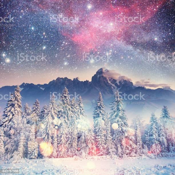 Photo of Dairy Star Trek in the winter woods. Carpathians, Ukraine, Europ