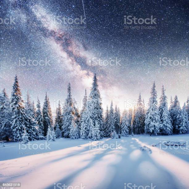 Photo of Dairy Star Trek in the winter woods. Dramatic and picturesque sc