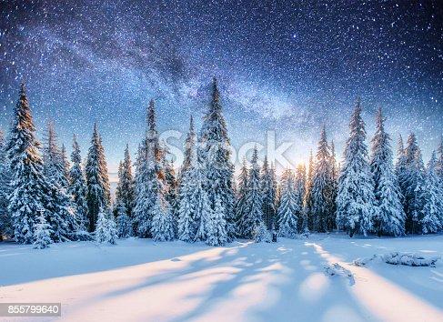 istock Dairy Star Trek in the winter woods 855799640