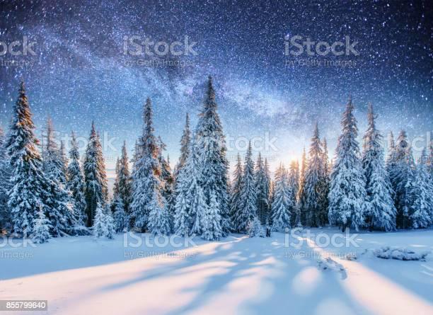 Photo of Dairy Star Trek in the winter woods