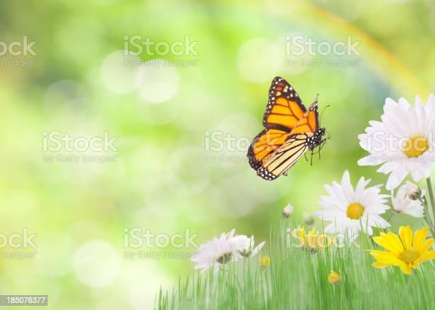 Photo of Daisies and a Monarch Butterfly