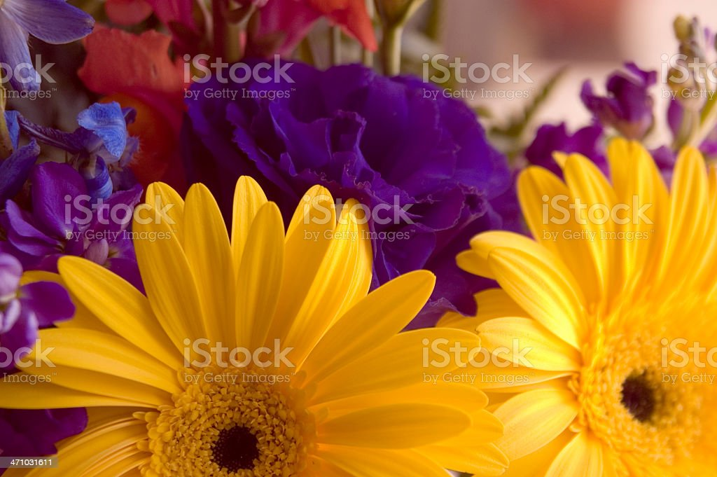 Daisies and purple flowers royalty-free stock photo