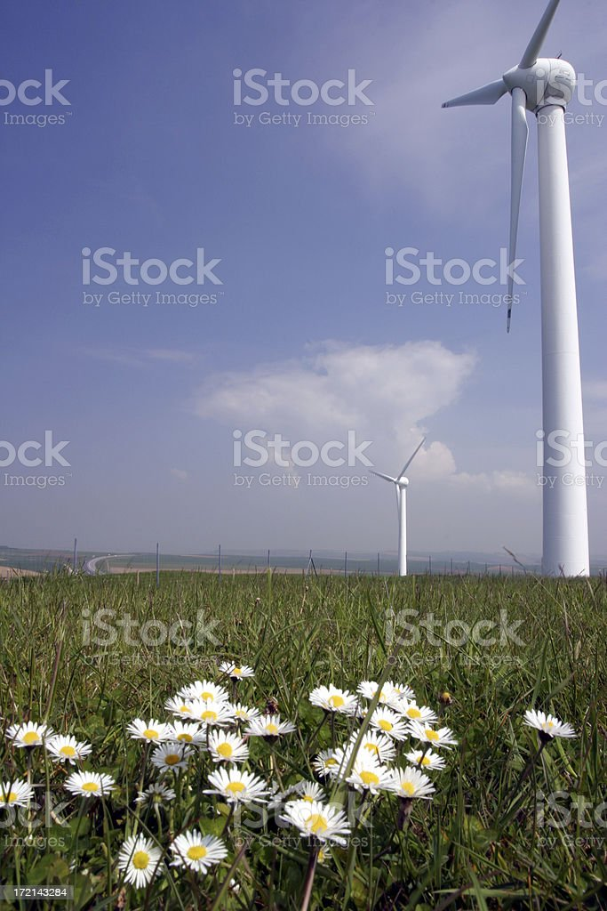 Daisies and wind power royalty-free stock photo