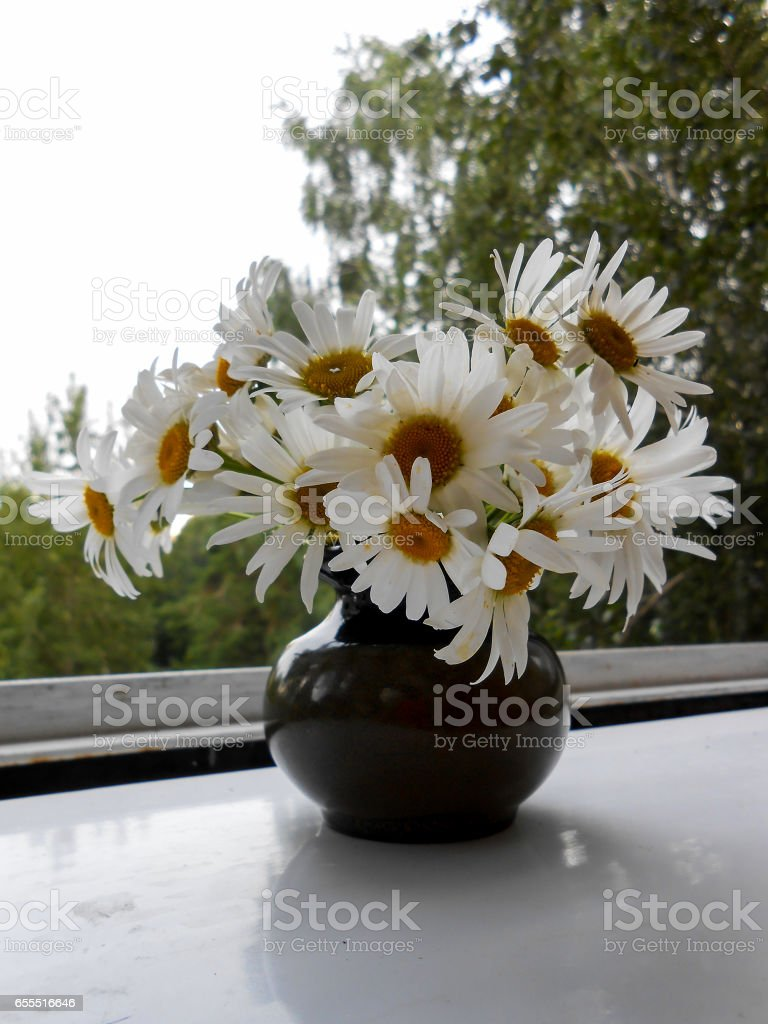 daisies bouquet  in ceramic vase on the window stock photo
