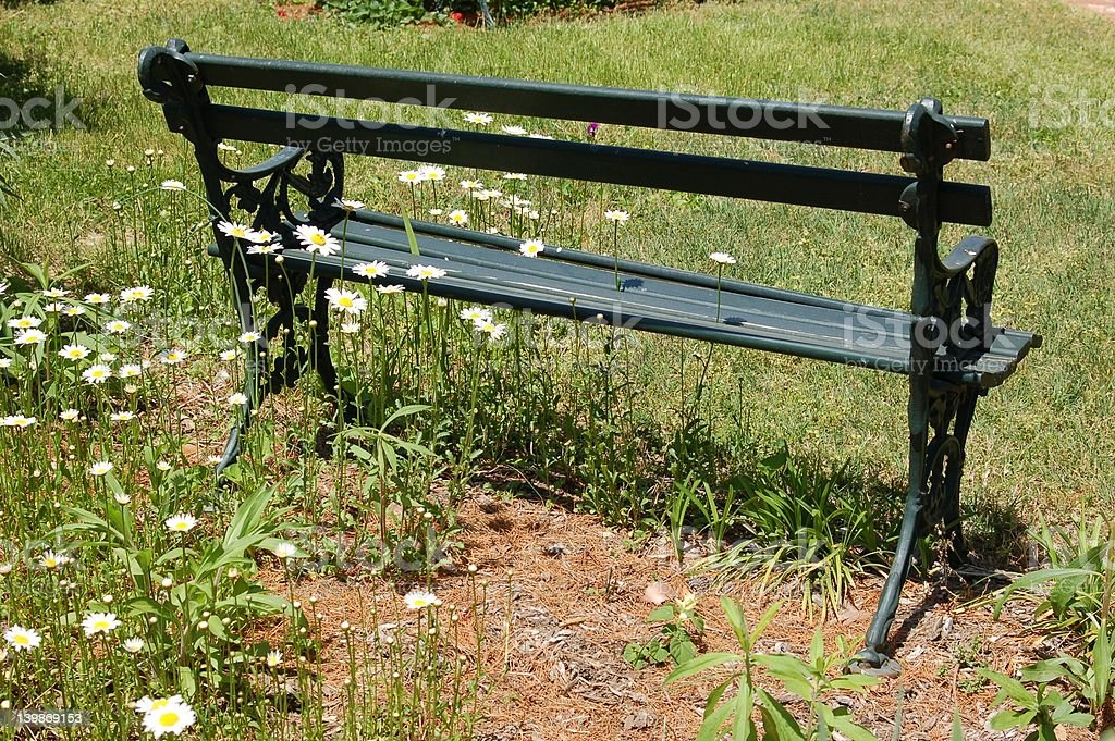 Daisies bringing beauty to a bench royalty-free stock photo