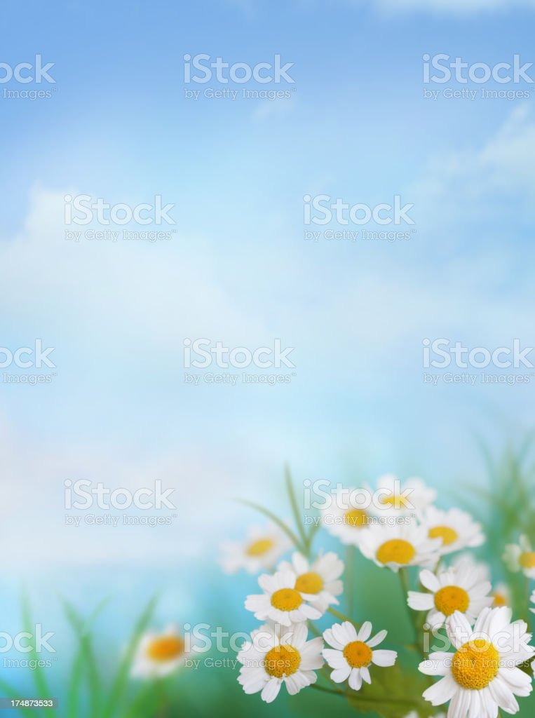 Daisies By The River stock photo