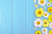 Yellow and white daisy flowers above light blue wooden background, with copy space available for text.