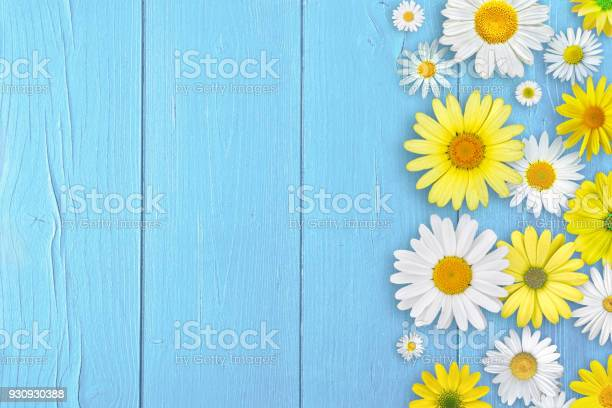 Daisies flowers above wood background picture id930930388?b=1&k=6&m=930930388&s=612x612&h=soba3vqdbrjcld9wbc9qwgynisvmhyl4t88uf9dcy g=