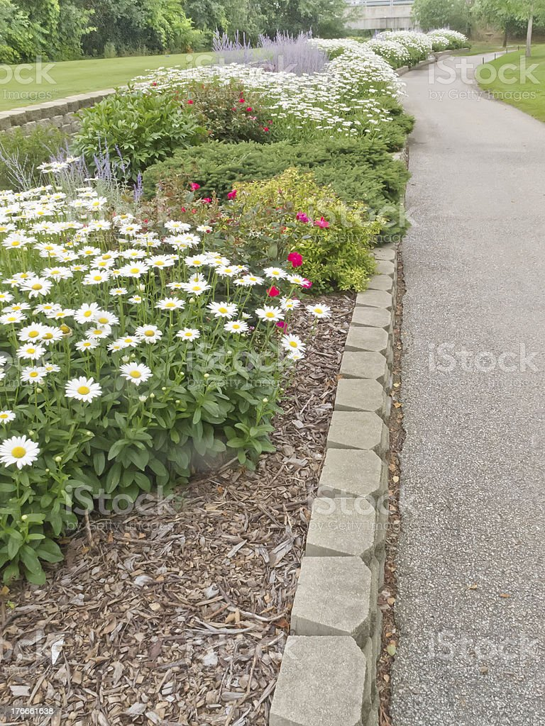 Daisies for greater distance off the tee (you wish) royalty-free stock photo