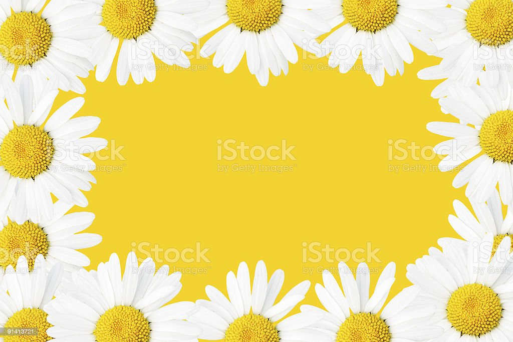 Daisies frame royalty-free stock photo