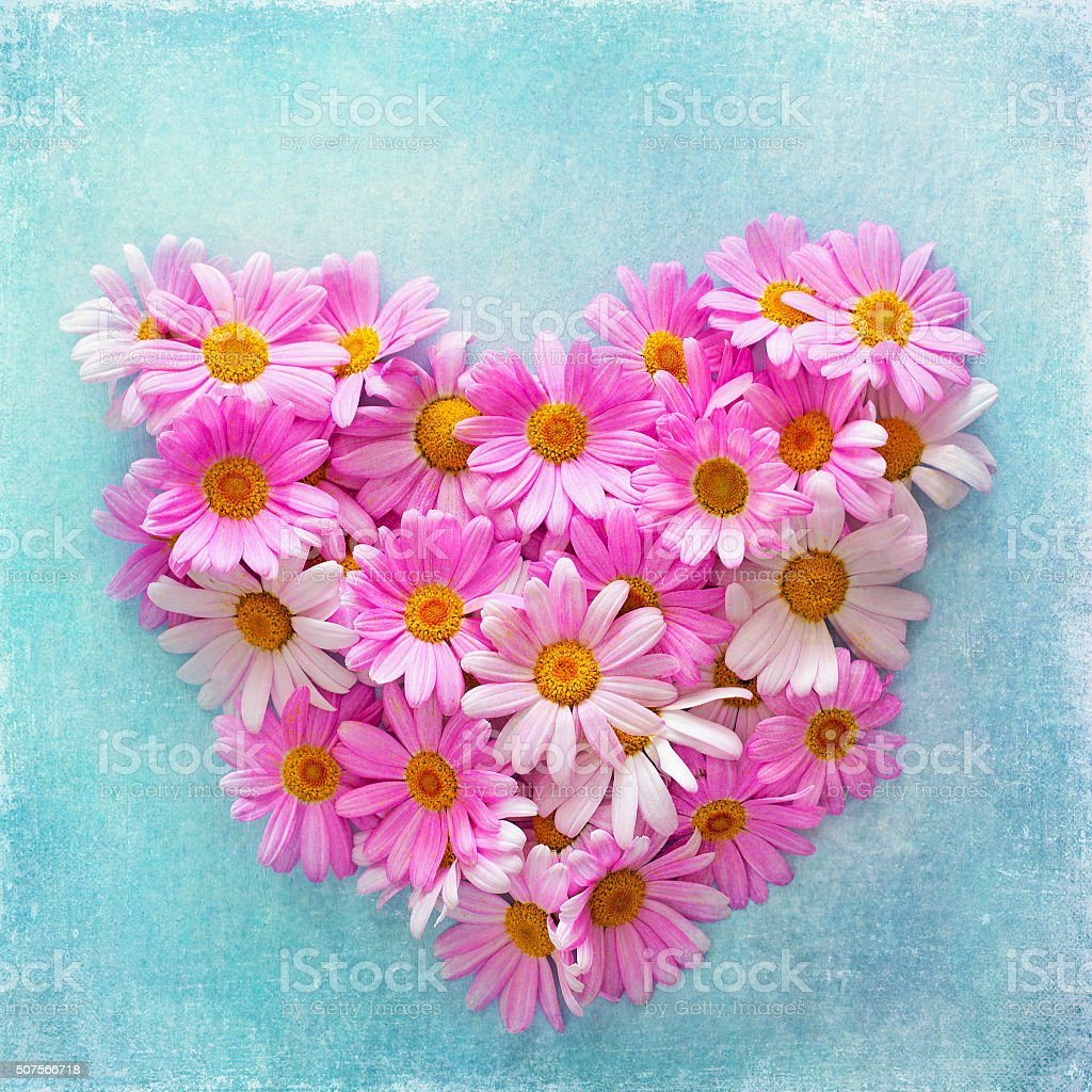 daisies in the shape of a heart stock photo