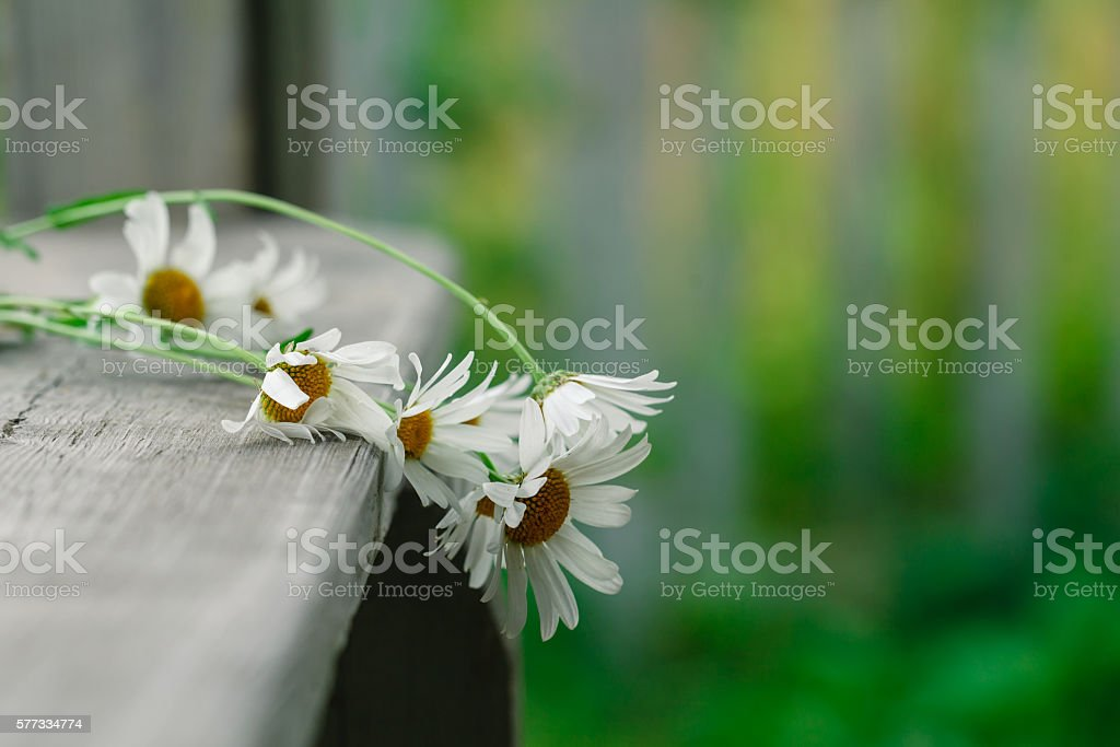daisies lie on a wooden podium – Foto