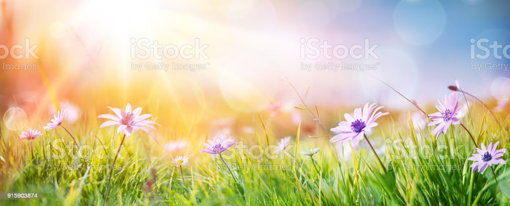 Margaridas em campo - resumo primavera paisagem - Foto de stock de Abstrato royalty-free