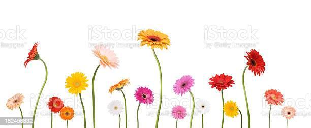 Daisies picture id182458832?b=1&k=6&m=182458832&s=612x612&h= m1tje8  2bwnrr8c7kwwrsxi9 l9usa1iqc vfkhve=