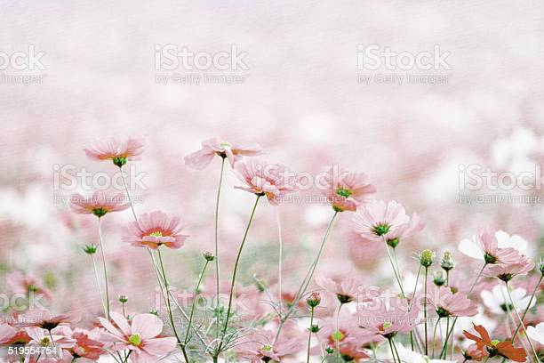 Photo of Daisies spring flowers