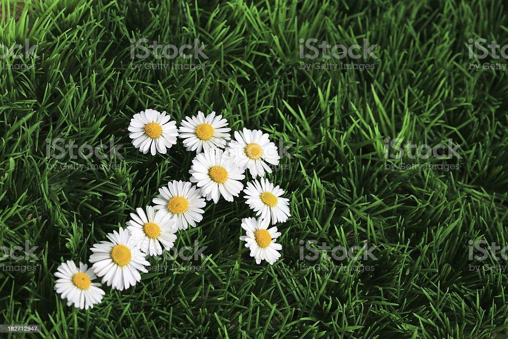 Daisy arrow sign royalty-free stock photo
