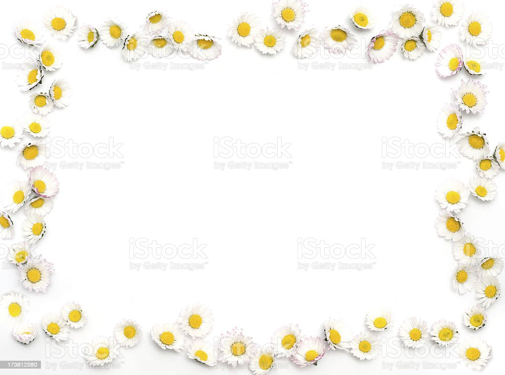 daisy border stock photo   more pictures of bright istock daisies clipart daisies clipart black and white