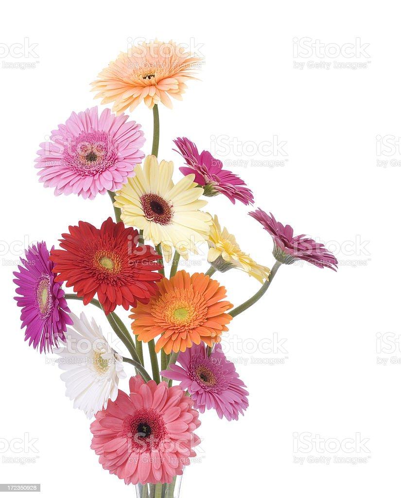 Daisy Bouquet (XL) royalty-free stock photo
