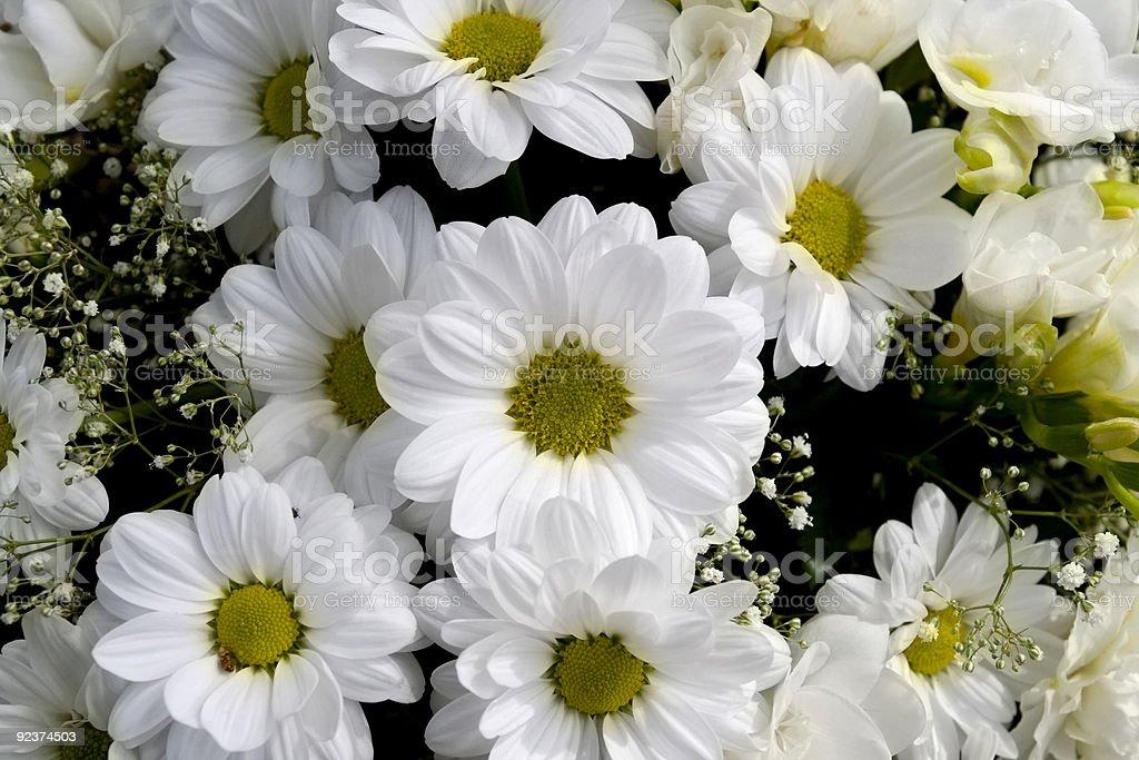 Daisy bouquet royalty-free stock photo