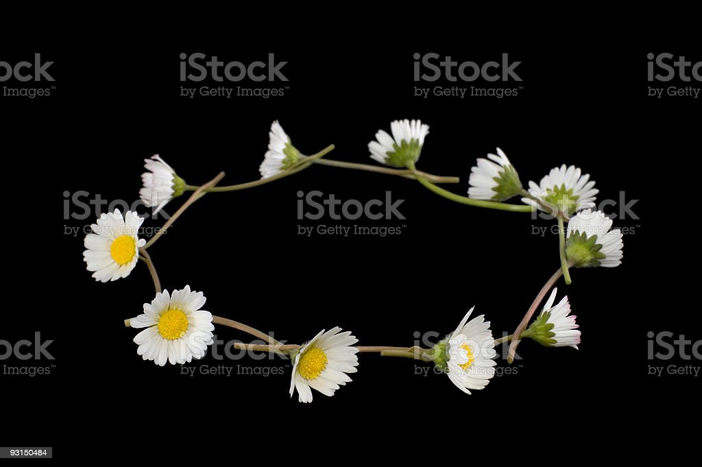 Daisy Chain on black royalty-free stock photo