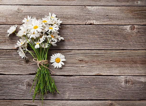 daisy chamomile flowers bouquet - 雛菊 菊科 個照片及圖片檔
