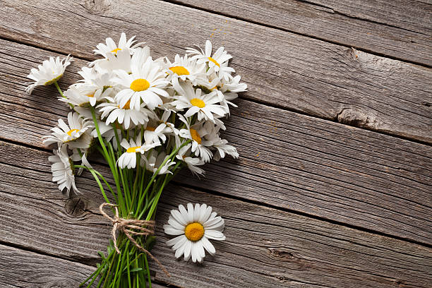 Daisy chamomile flowers on wood stock photo