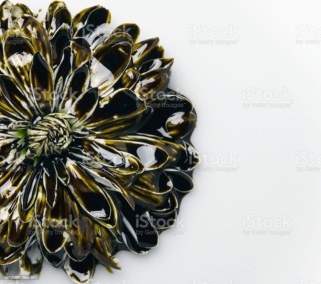 Daisy covered in motor oil, close-up royalty free stockfoto