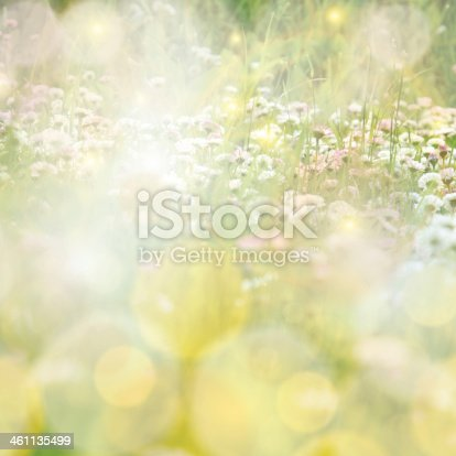 istock Daisy field colorful sun light background 461135499