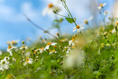 Cute field of daisy flowers in a sunny day.