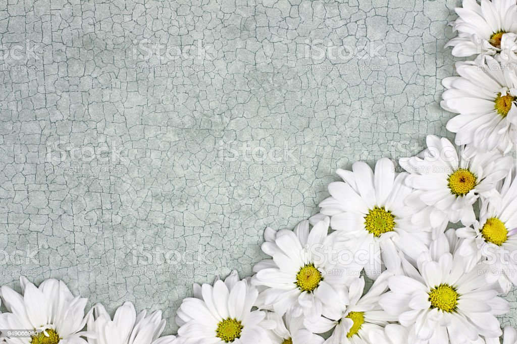 Daisy Floral Background stock photo