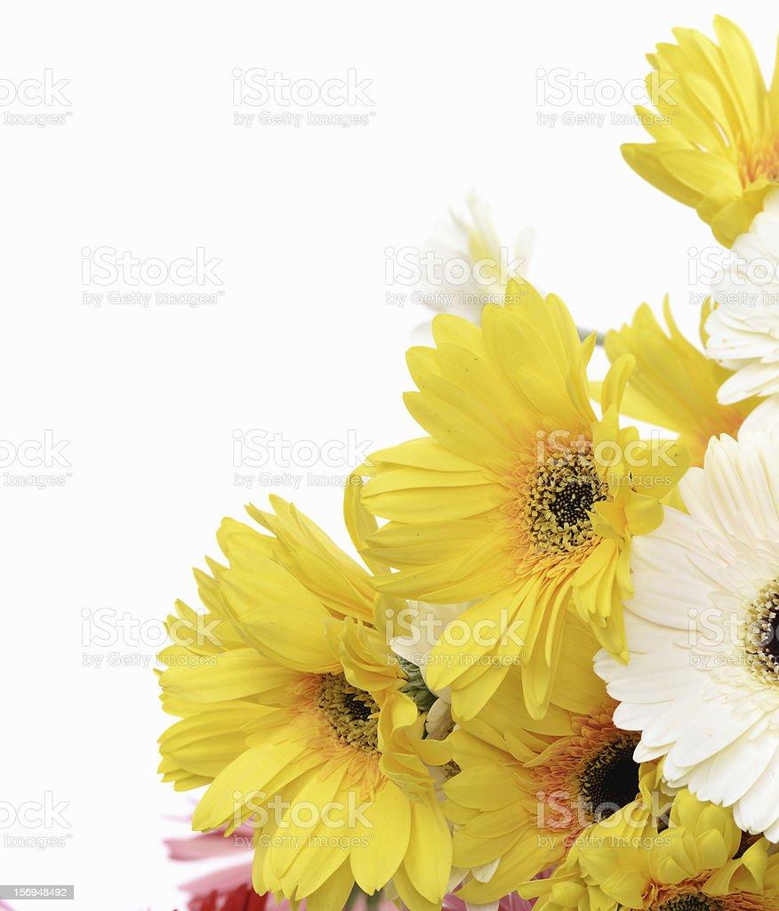 Daisy flower border stock photo 156948492 istock daisy flower border royalty free stock photo izmirmasajfo