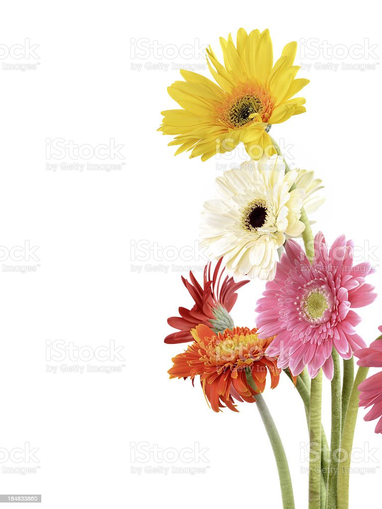 Daisy Flower Bouquet Stock Photo More Pictures Of Beauty In Nature