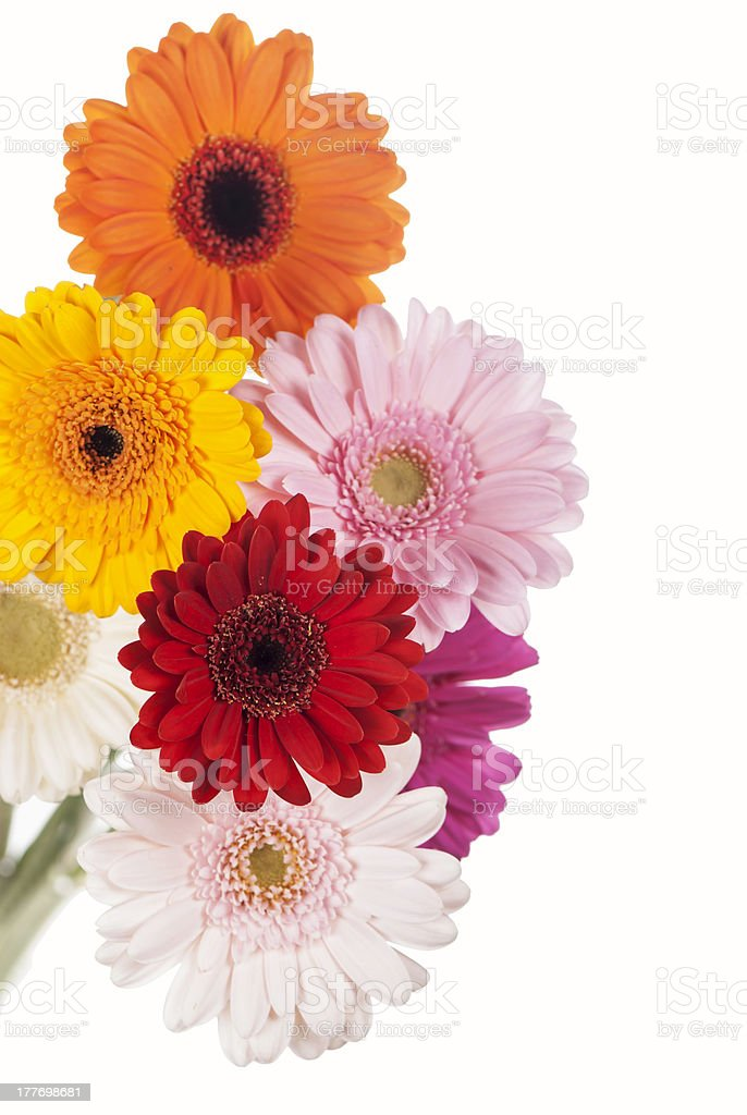 Daisy flower gerbera bouquet isolated on white background royalty-free stock photo