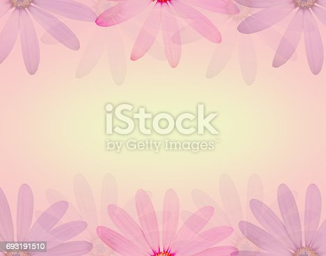 istock daisy flower in soft sweet color and blur style texture background 693191510