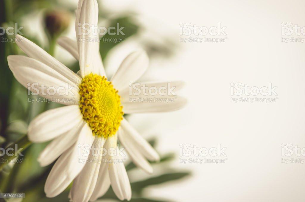 daisy Blume  – Foto