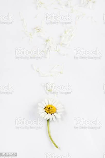 Daisy flower with petals on wooden white background picture id531628524?b=1&k=6&m=531628524&s=612x612&h=rvsz0if qyfohiqnfa 2jjshkrjt6uf8mvpqqhcz0gw=