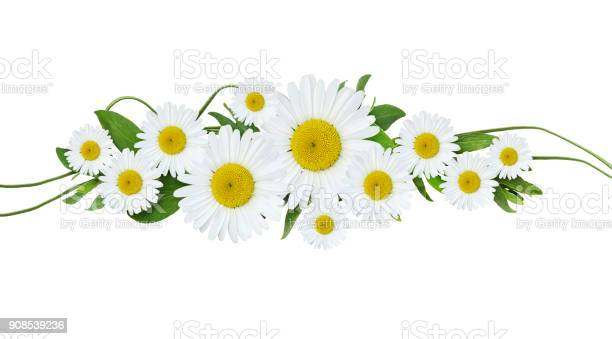 Daisy flowers and green grass arrangement picture id908539236?b=1&k=6&m=908539236&s=612x612&h=oynjwfqmwcquimesvyjjleudvgumegyaiohwiotum8y=
