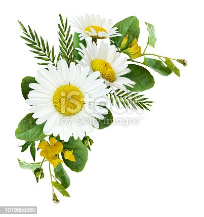 Daisy flowers and wild grass in a summer corner arrangement isolated on white background. Flat lay. Top view.