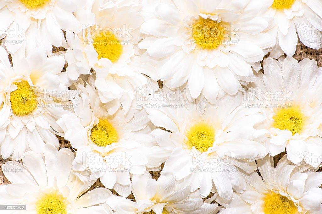 Daisy Blumen Hintergrund Weißer Farbe Blumen Hintergründe Stock ...