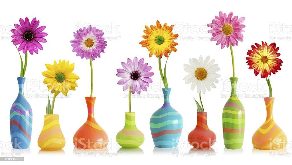 Daisy flowers in vases stock photo