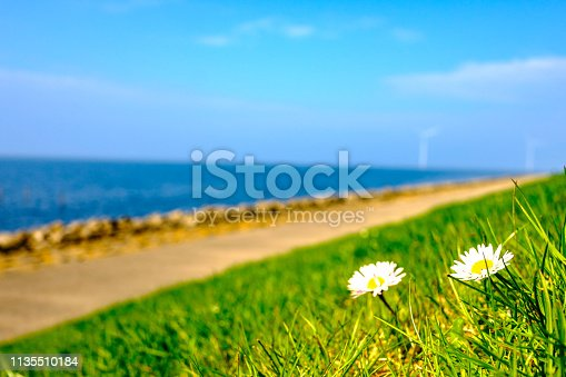Daisy flowers in a springtime meadow at the end of a beautiful spring day