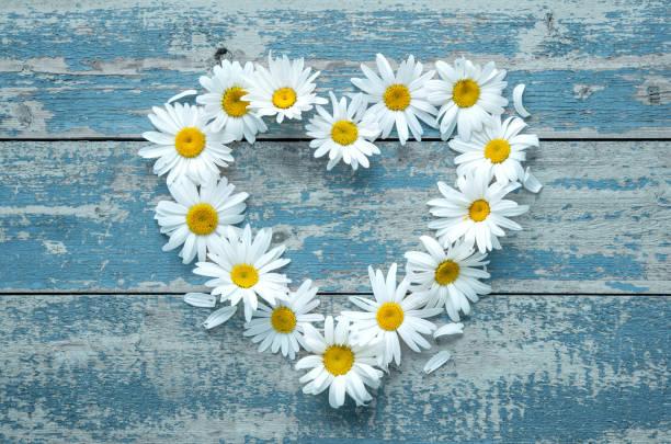 Daisy flowers on wooden background picture id686240932?b=1&k=6&m=686240932&s=612x612&w=0&h=jlg4roff74ujvpfl zhmu68bxrhppn3c dwrdl1d7pk=