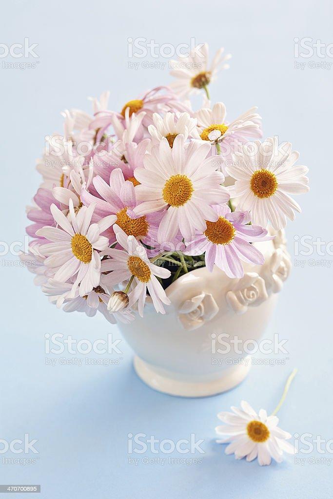 Gänseblümchen-Blumen Lizenzfreies stock-foto