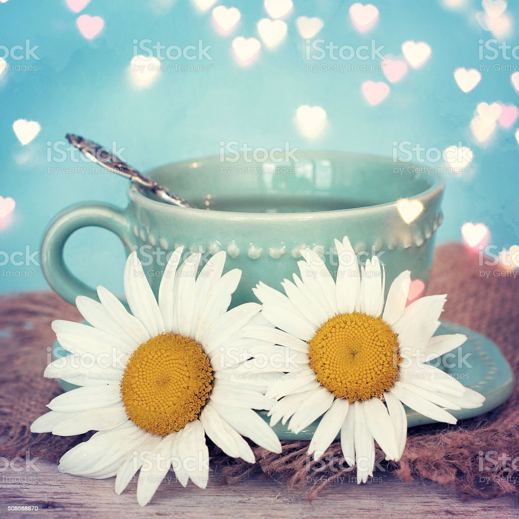 Daisy Flowers With Tea Cup Stock Photo More Pictures Of Blue Istock