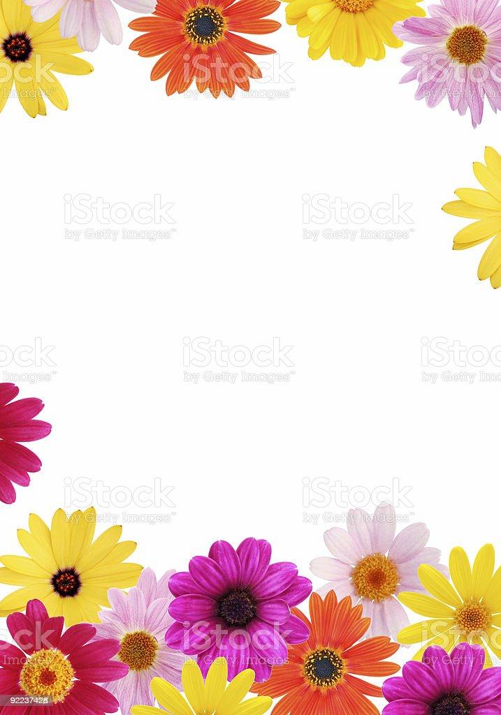 Daisy frame stock photo