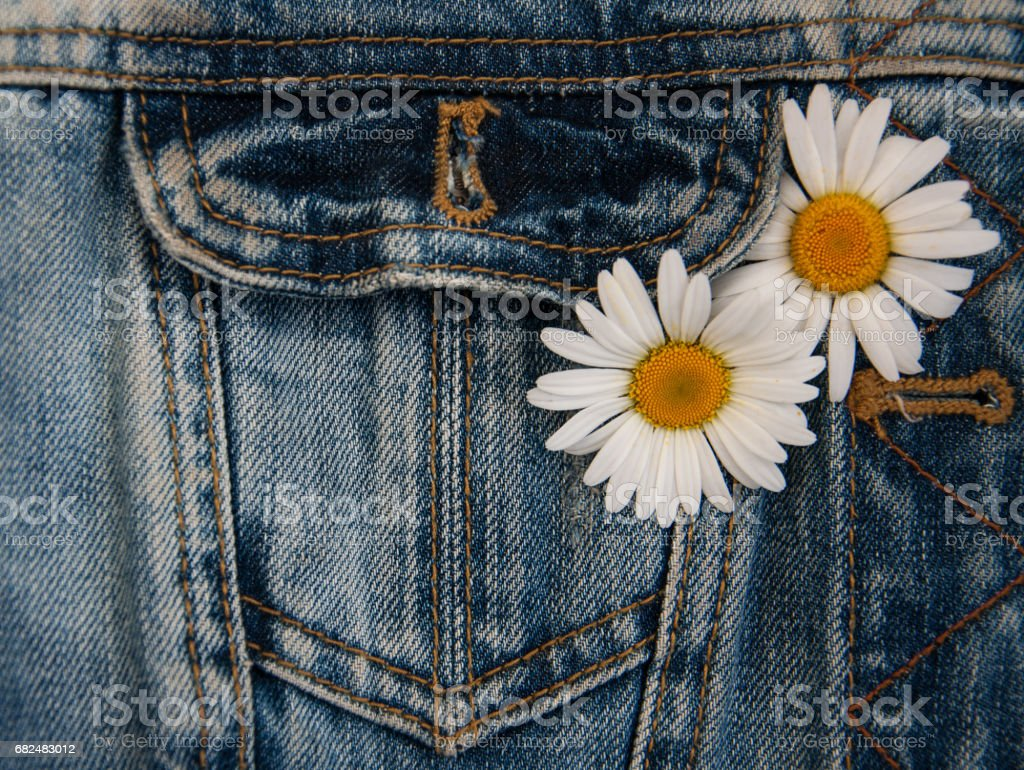 daisy in jeans pocket royalty-free stock photo