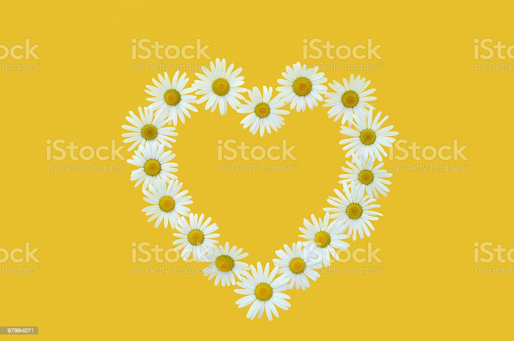 Daisy in love shape over yellow background royalty-free stock photo