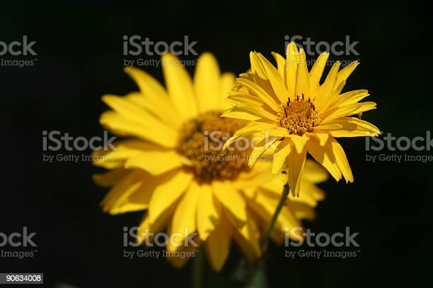 Daisy In Training Stock Photo - Download Image Now